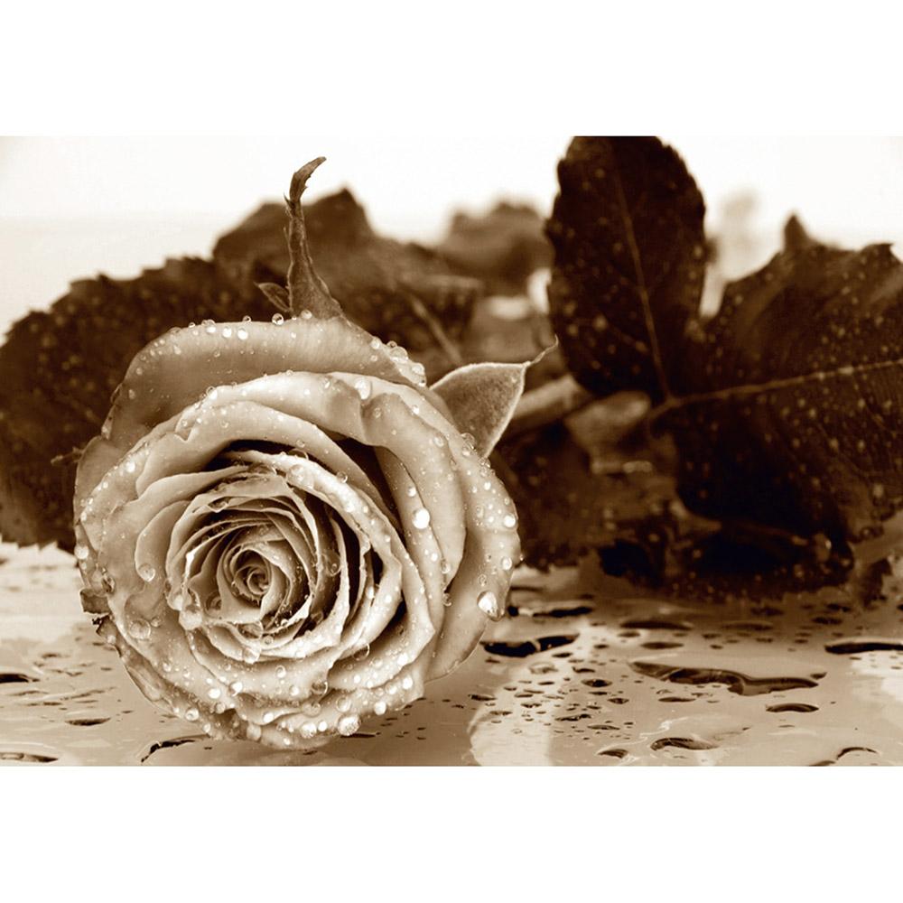Фототапет Стандарт 360×254 см, 4ч., бяло черна роза