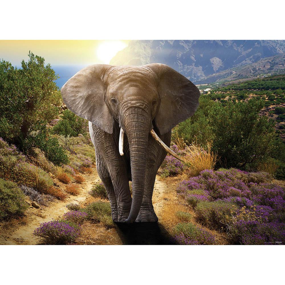 фототапет Флис 160×110/1ч Плакат Слон